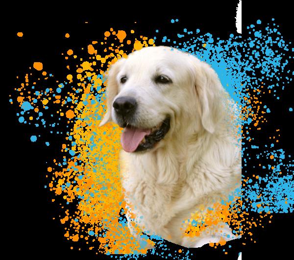 DIA DOG'N CAT® ochucené tablety 6ks