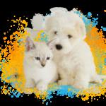 dog-cat-foto
