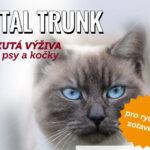 VITAL_TRUNK-kocka 2